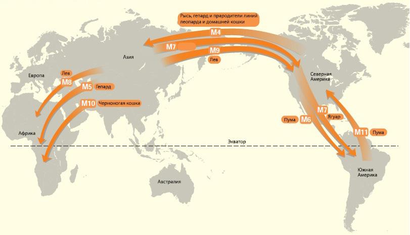 Вторая волна миграции кошачьих